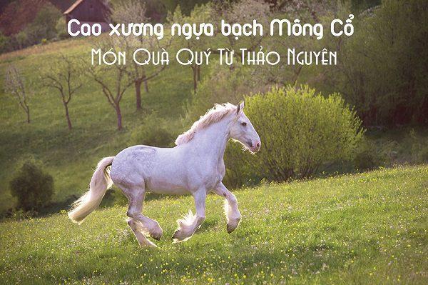 Cao xương ngựa bạch Mông Cổ - nguồn nguyên liệu trân quý từ thảo nguyên